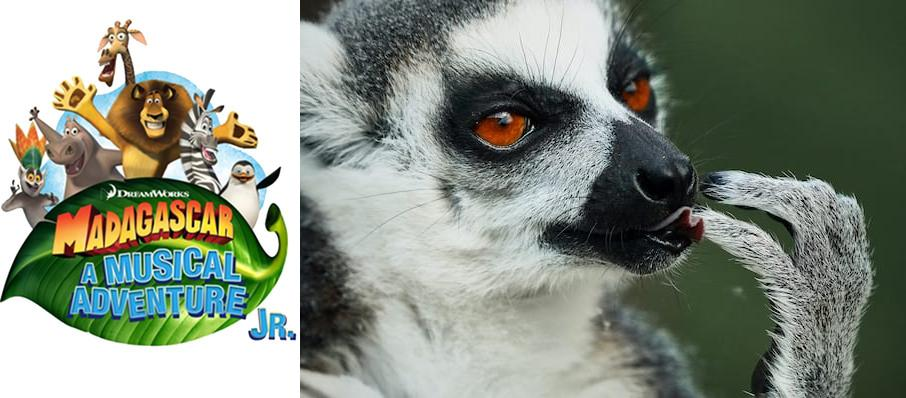 Madagascar - A Musical Adventure at Marriott Theatre
