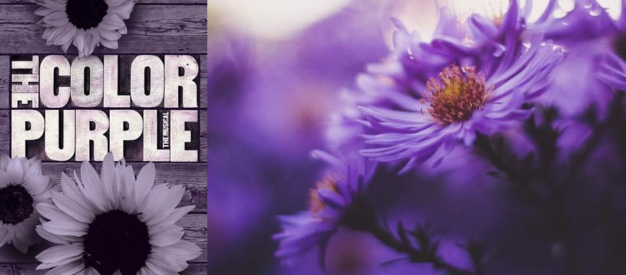 The Color Purple at Drury Lane Theatre Oakbrook Terrace